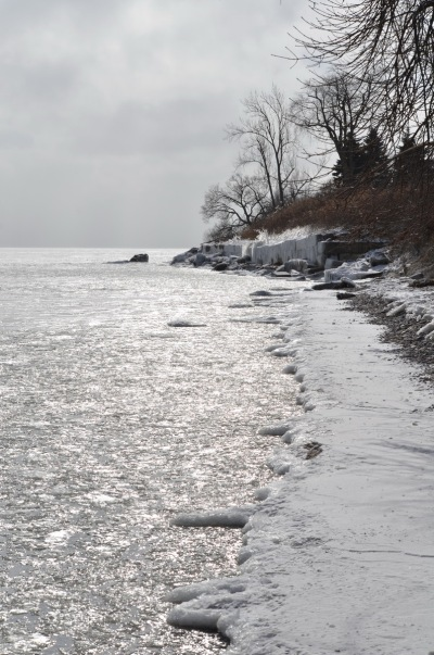 ice coated shoreline and trees, lake ontario, ontario, canada, 3